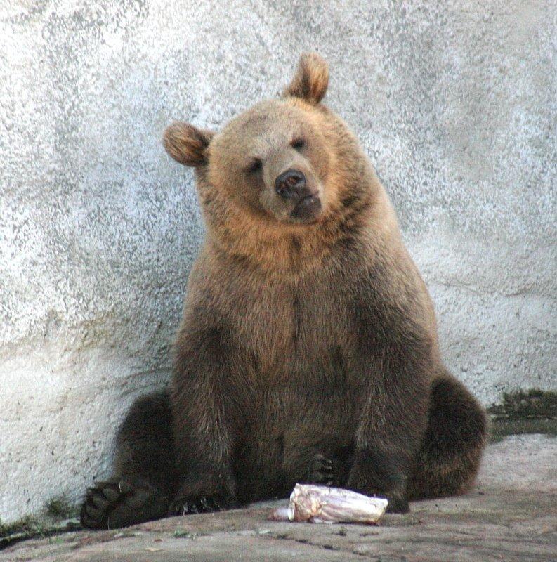 blogi sinkku jogi karhu