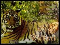 Tiikerit ovat erityisen ihailtuja kissapetoja kauniin turkkinsa takia, mutta niitä on enää jäljellä reilusti alle 7000. Tiikerit rakastavat vettä ja uimista ja kuten kotikissatkin, ne pystyvät vetämään kyntensä suojaan tassujensa sisään. Niiden yönäkö on kuusi kertaa parempi kuin ihmisellä.