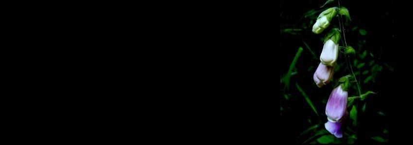 870866.jpg